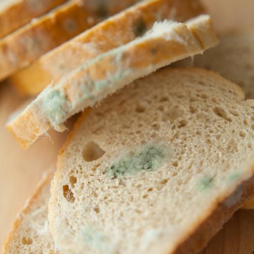 mögel på bröd