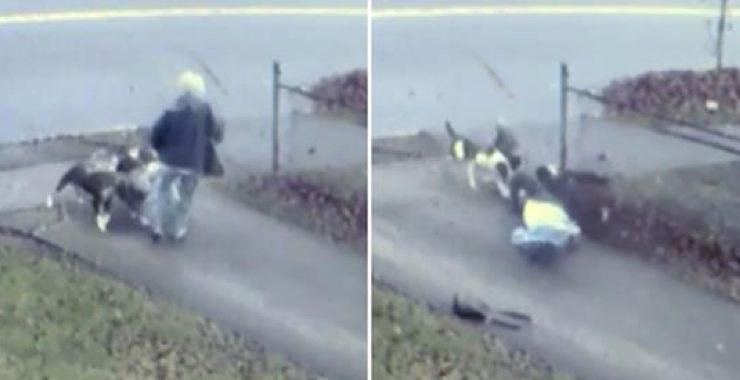 La voisine entend une femme terrifiée hurler et la découvre encerclée par une meute de chiens